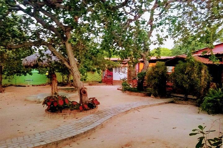 Quintal com árvores e jardim