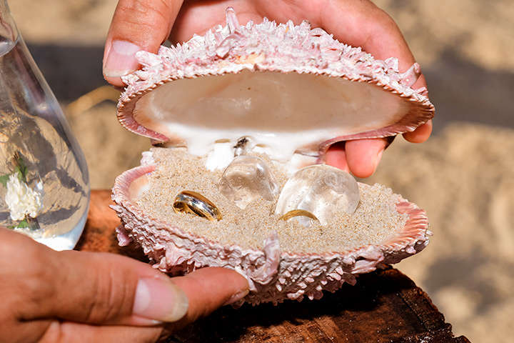 Alianças de casamento dentro de concha da praia